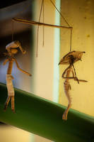 Do not we all? puppets on a string ... by RodneyHomeMade