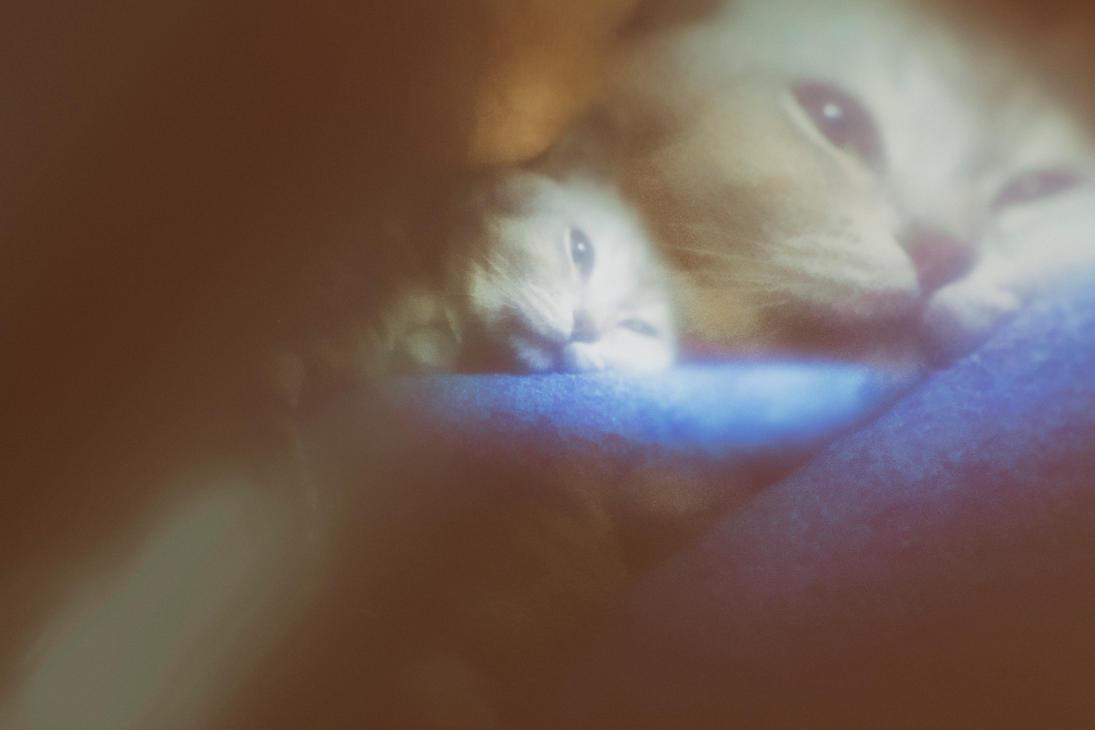 cat by panferov