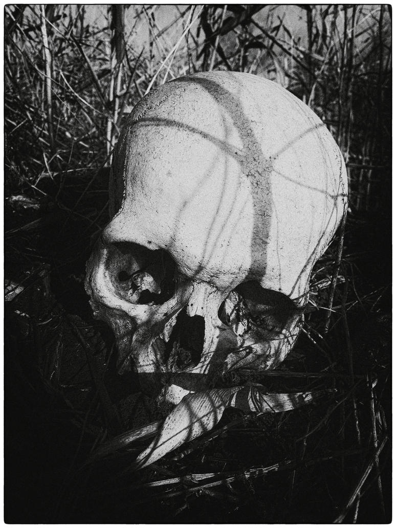 Skull by panferov
