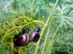 Snailshot - Here we come  -.