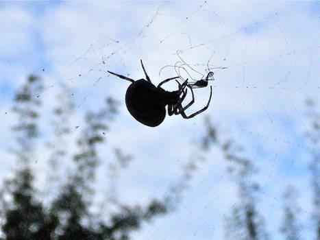 2010Aug28 - Corpulent spider