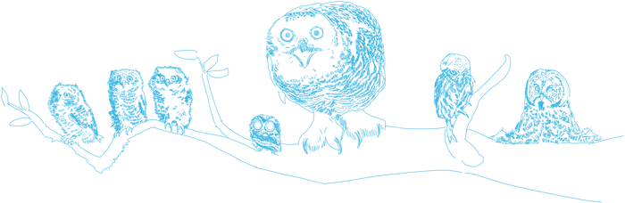 Kullid owls