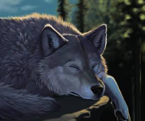 Sleepy Wolf by Ckrall
