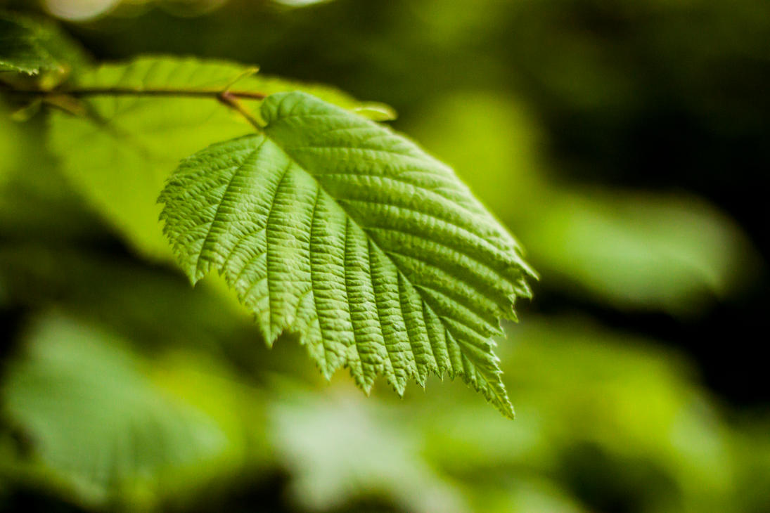 Free Stock Photo Leaf Free stock photo by