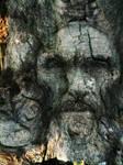 Spirit of the woods 1