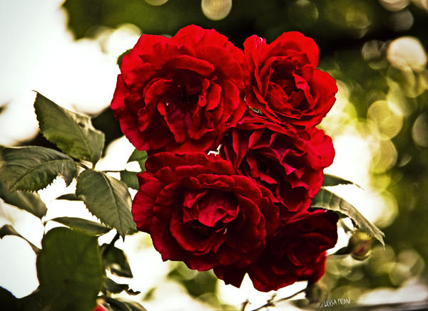 blood-red roses by gameover2009