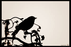 singing silhouette 2 by oetzy