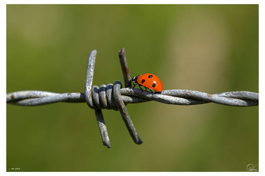 on wire...