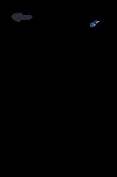 Lineart - Akhal Teke