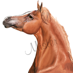 Arabian - Head by Zgodnij-Baszan