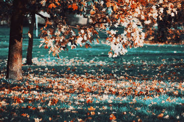 wonder fall by LinkyQ