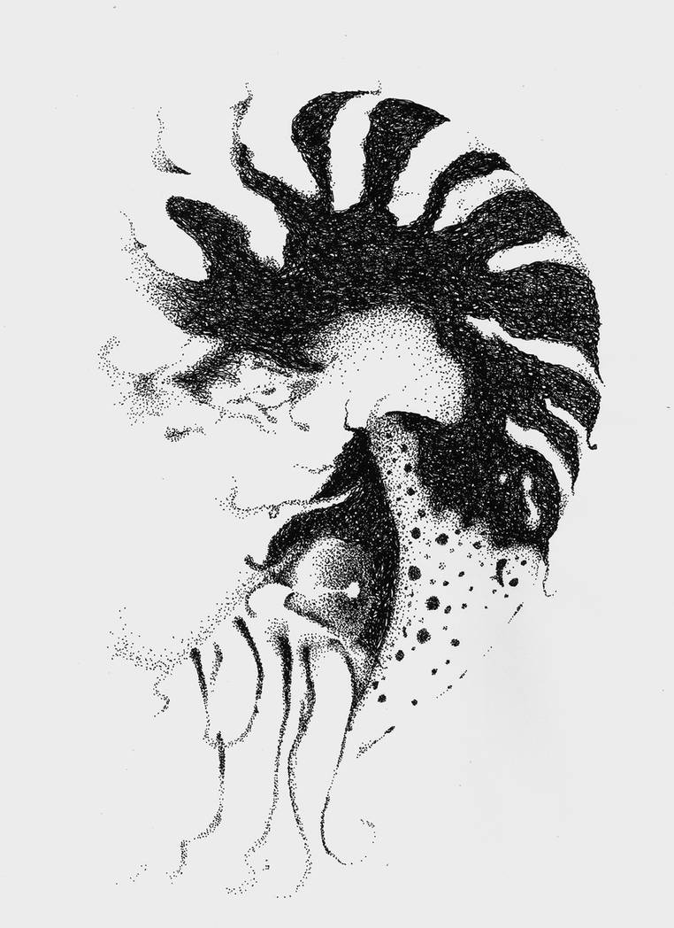 Pen and Ink Study #2 (Ammonite) by kevin-roque
