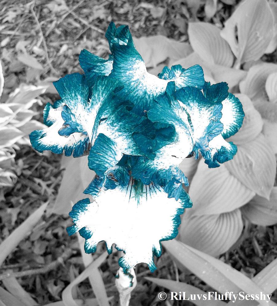 Feelin' Blue by RiLuvsFluffySesshy