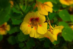 Beautiful Yellow Flower by Saptarang
