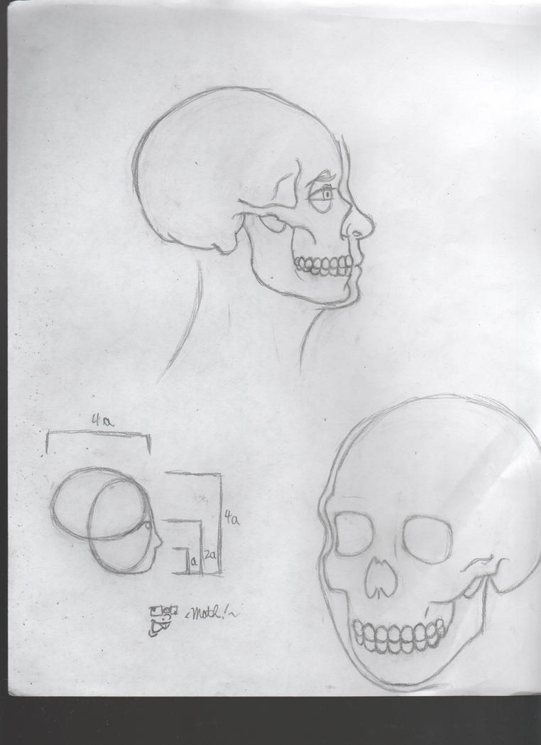 Skull Studies by Dragimal