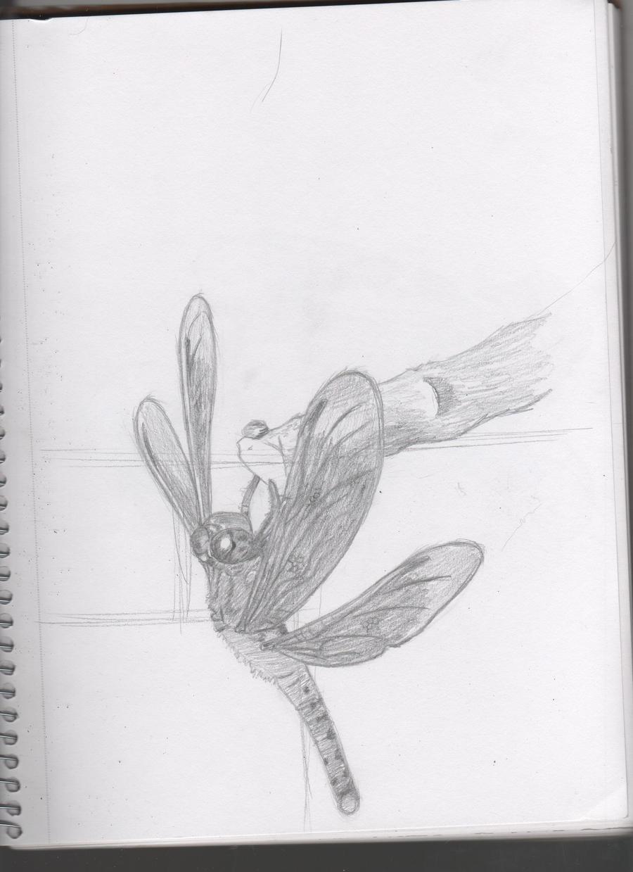 Dragonfly Golden Spiral by Dragimal