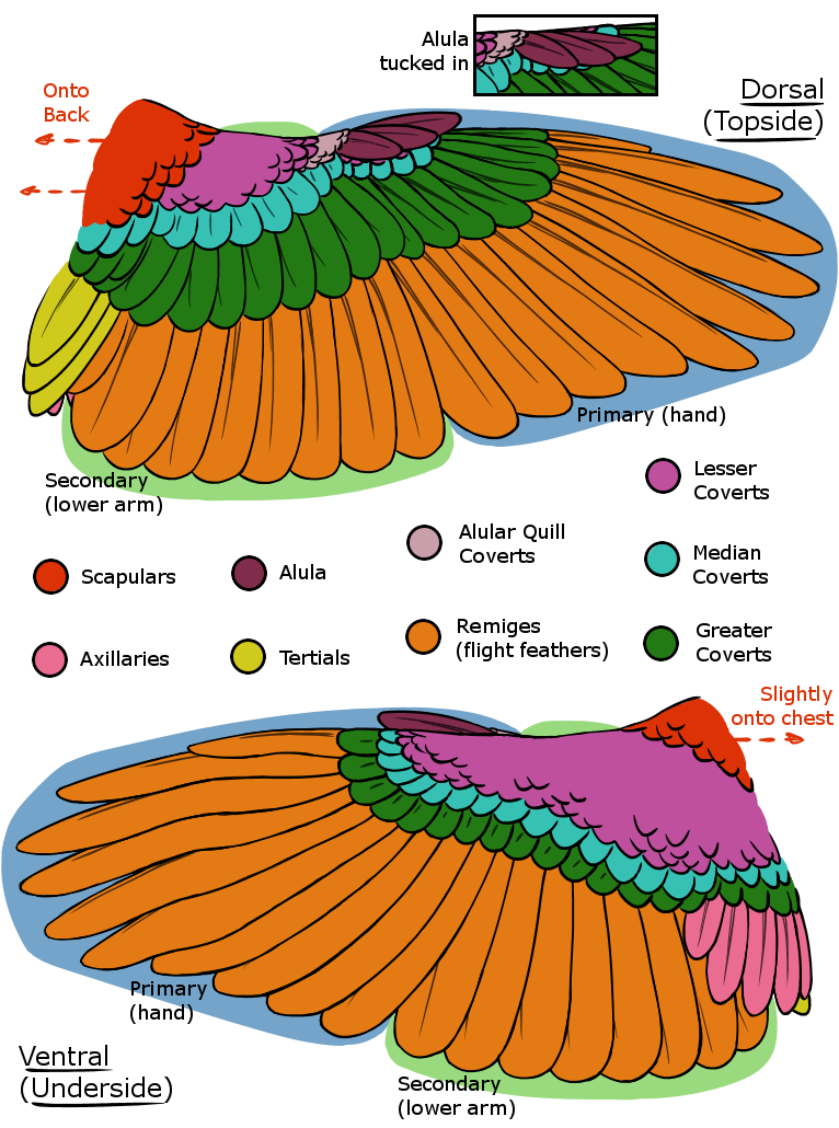 Feather Arrangement by Dragimal