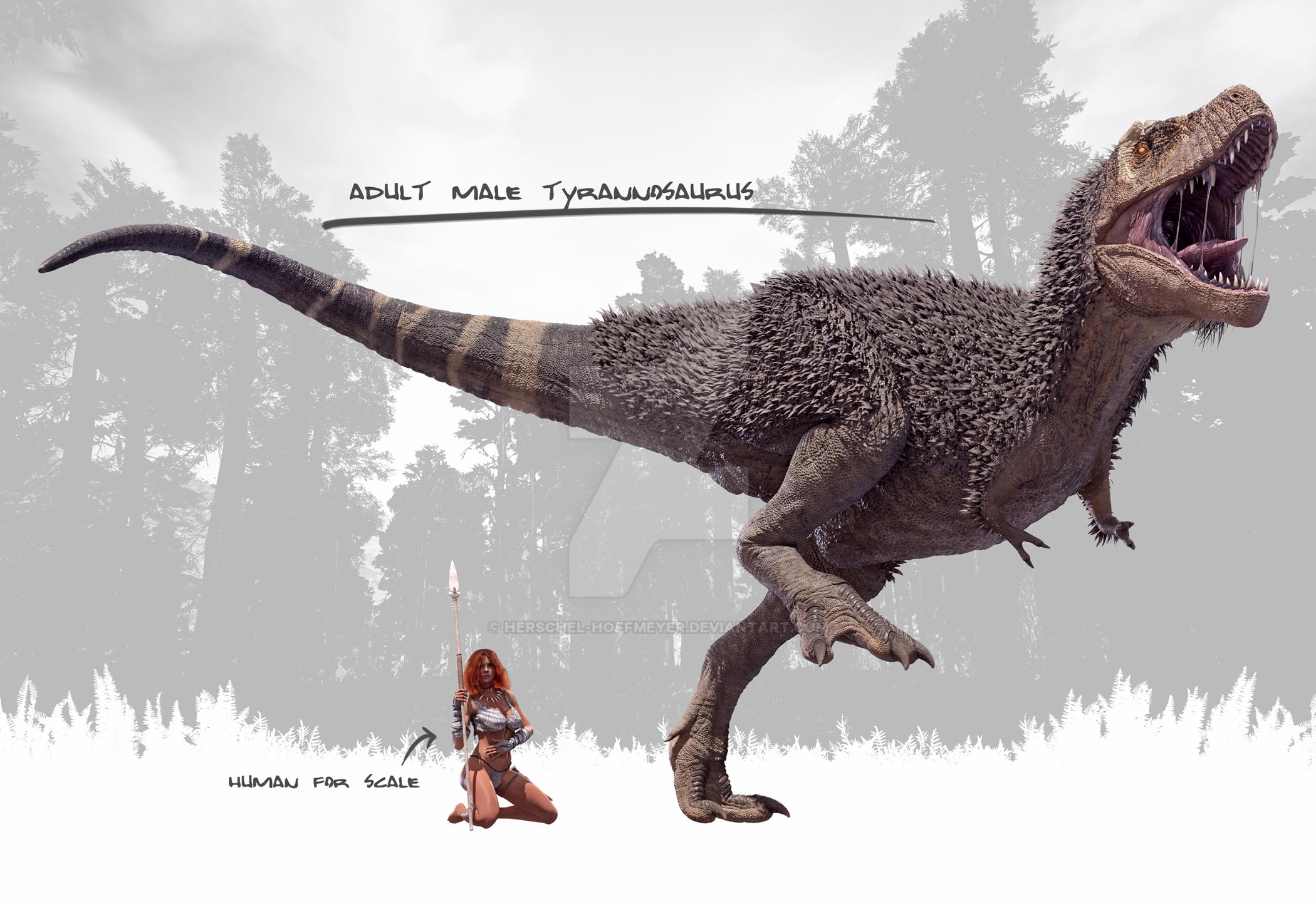 Male Tyrannosaurus Rex by Herschel-Hoffmeyer on DeviantArt