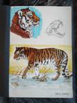Siberian tiger sketch by JeraJaires
