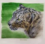 Snow Leopard sketch