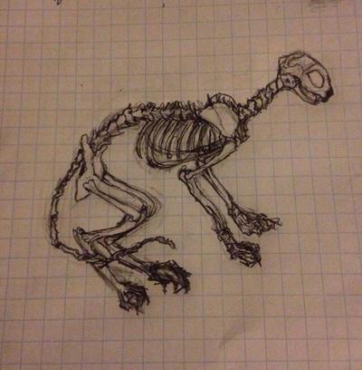 Skelecat by SolangeGag