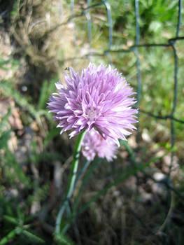 Flower No.3