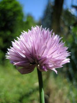 Flower No.4