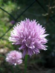 Flower No.5