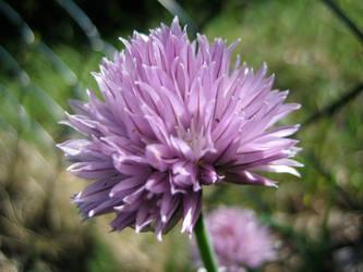 Flower No.6