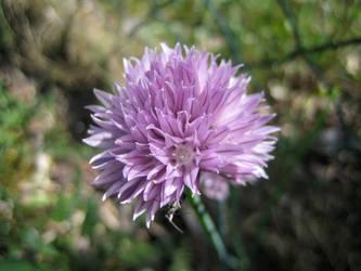 Flower No.7
