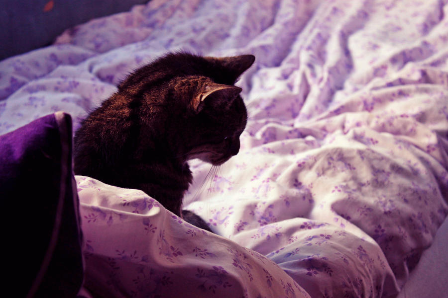Cat portrait ~ by fetchingfeast
