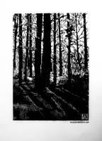forest by karojasia