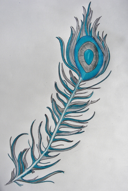 Peacock feather drawing tattoo