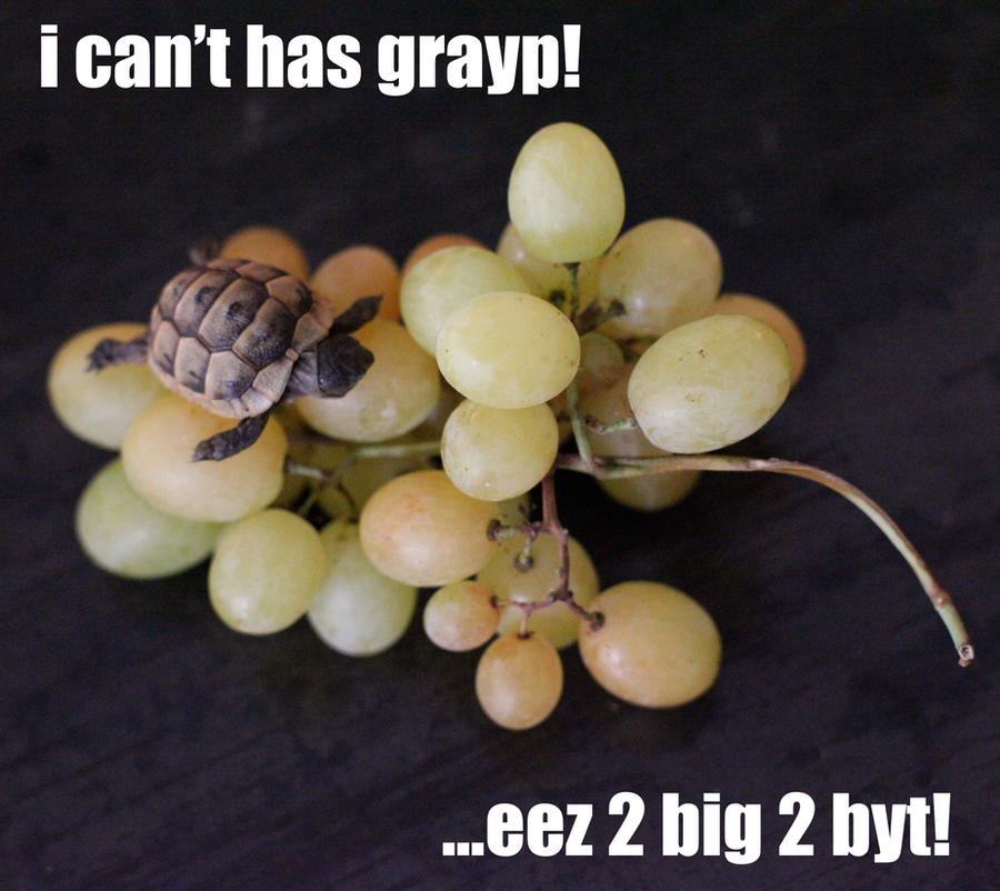 i can't has grayp by spyed