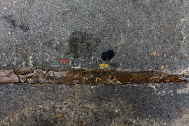 Caterpillar in Manhattan