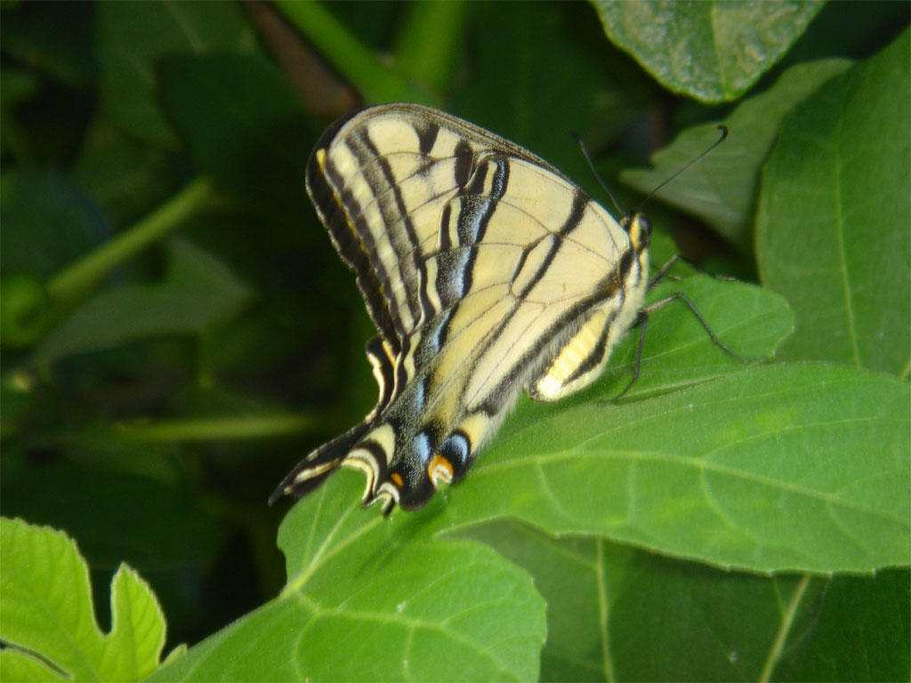 Revenge tastes like Butterfly by spyed