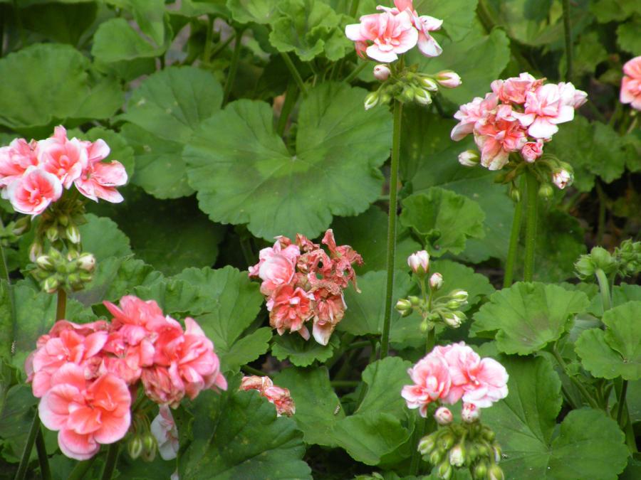 Jardines de monforte by ligechan on deviantart for Jardines de monforte