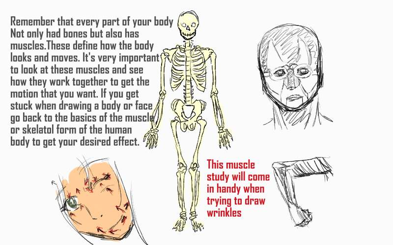 Anime Tutorial No 4 Skeleton And Muscle Review By Moonwisher