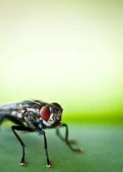 A fly by mk-ultra