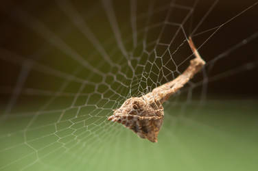 Sleeping spider by mk-ultra
