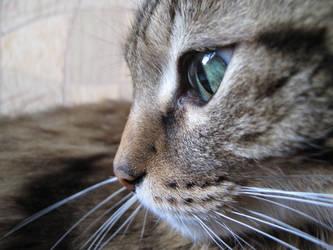 My kitty 7 by Taniux1994