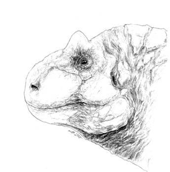 Carnotaurus Sastrei - Head Sketch by LazerWhale