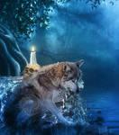 Merlin The grey wolf