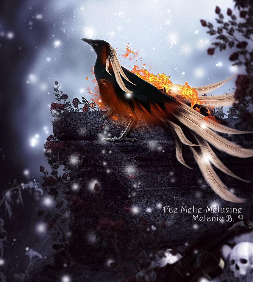 Raven-Phoenix by MelieMelusine