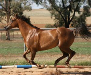 Goanna-Equine's Profile Picture