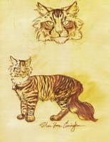 Bramblestar Design Sketch