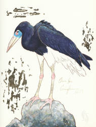 Stork of Abdim by NeonBoneyard