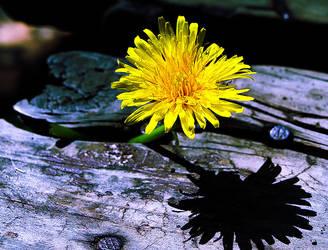 yellow by papashillingi