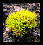 Fractal Moss by LetsAllBeNuerotic