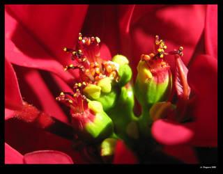 Winter Blossom by AngelHalfie